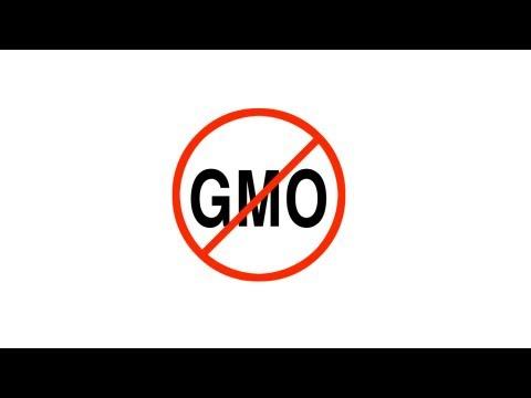 GMO Global Foods Alert 2013