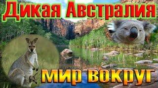 видео Природа Австралии
