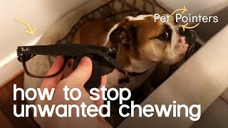 How To Stop Unwanted Chewing | Pet Pointers