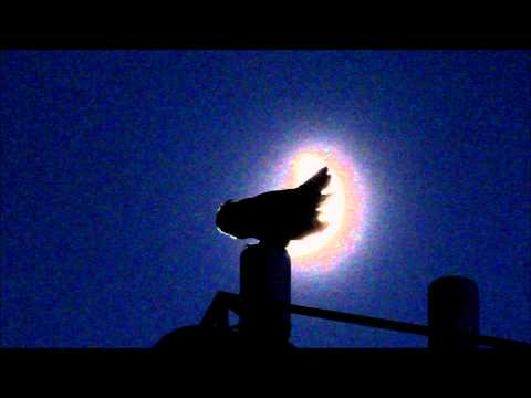 Great Horned Owl Hooting At The Moon