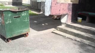 Крысы во дворе Гродно 2