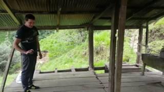 Blank Guns firing steel pellets