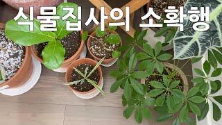 [밴쿠버 브이로그 Vlog] 식물집사의 소확행, 1인가…