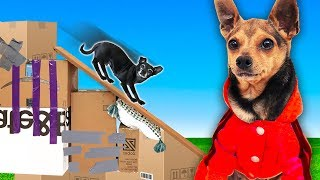We Built our Dogs a Giant Slide Only Using Moving Boxes!