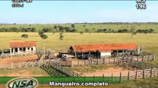 Fazenda em Três Lagoas MS 1573 HA you tube.wmv