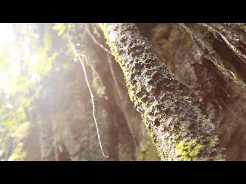 Episode 1 - The Importance of Botany