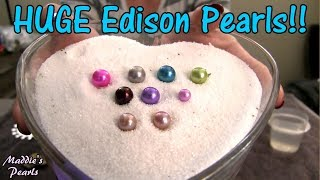 HUGE 11mm Edison Pearls!! Beautiful New Exotic GINORMOUS Edison Pearl Oysters for Live Pearl Parties