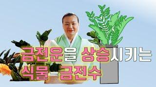 (오산점집) 금전운을 상승시키는 식물-금전수