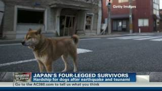 CNN: Japan's four-legged survivors thumbnail