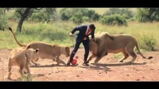 فيديو| مباراة كرة قدم بين رجل ومجموعة أسود