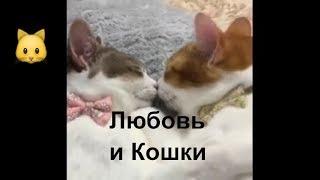 Любовь и Кошки. Отношения. Интересная подборка ко дню влюбленных