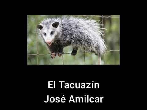 El Tacuazín
