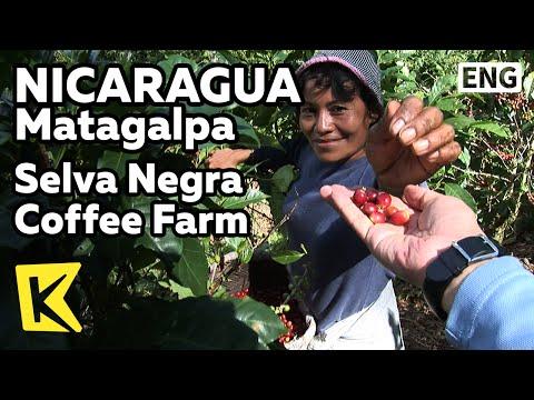 【k】nicaragua-travel-matagalpa[니카라과-여행-마타갈파]셀바-네그라-커피농장/selva-negra-coffee/farm/highland/tour/food
