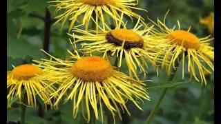 видео Озеленение и цветочное оформление кладбищ