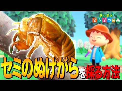 【あつ森】夏休みの自由研究「セミのぬけがら」を採る方法 ~Cicada Shell~【あつまれ どうぶつの森】