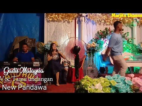 Gadis malaysia || voc.tamu undangan || New Pandawa