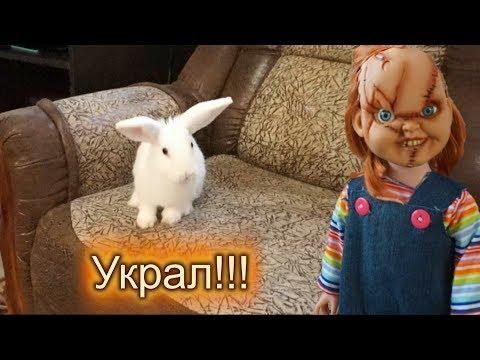 Чаки УКРАЛ кролика