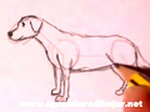 Dibujo de un perro a lpiz  Cmo dibujar animales  YouTube