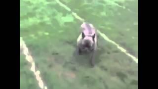 Собака занимается спортом