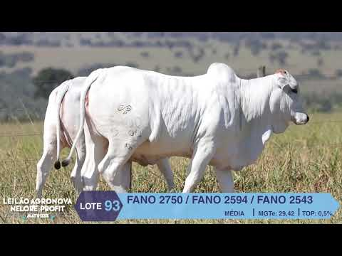LOTE 93 FANO 2750 X 2594 X 2543