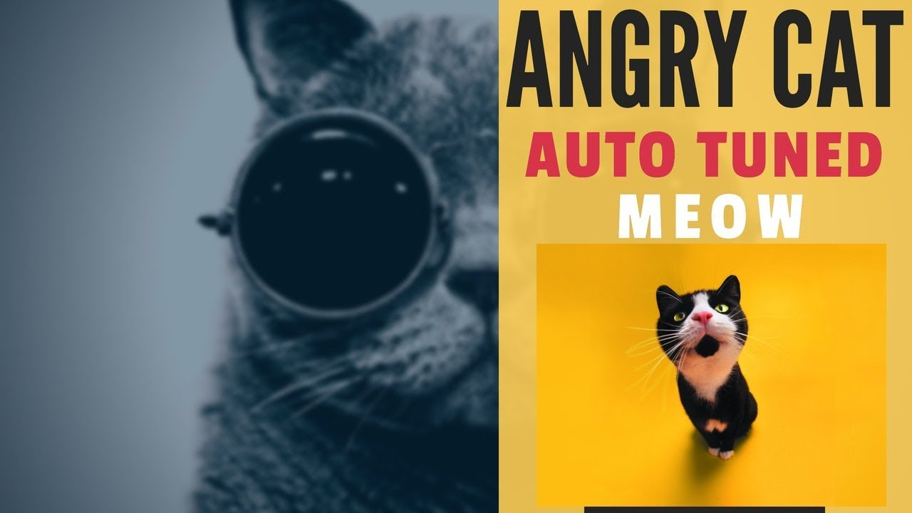 Angry Cat Meow Sound Effect