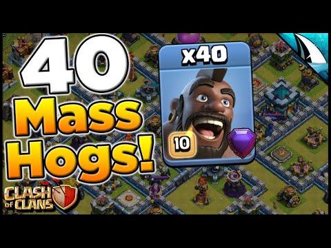 Mass Hogs Attack