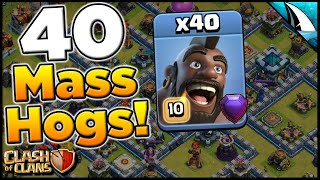 Mass Hogs Attack Strategy! 40 Hog Rider Attack! | Clash of Clans