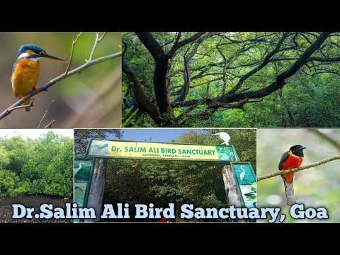 Dr.Salim Ali Bird Sanctuary, Chorao Island || Travel  Diary