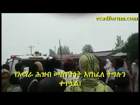 In northern Ethiopia, the Amhara resistance is getting momentum