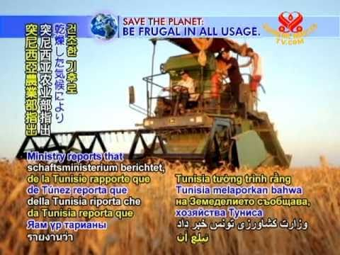 SAVE OUR PLANET - Tunisia cereal crop halves due to dry weather