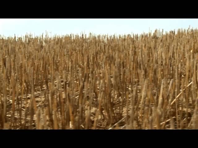 WA Grown - Johnson Farms