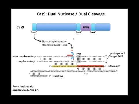 Site-Specific Nucleases Webinar presented by Blair Madison, Ph.D., University of Pennsylvania.