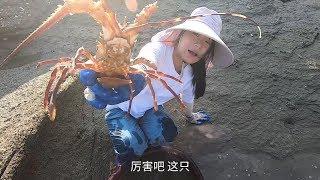 皮皮抽干小岛的大坑,撞见罕见的龙虾、海虾,今天抓的海货太肥了