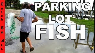 F SH In FLOODED PARK NG LOT