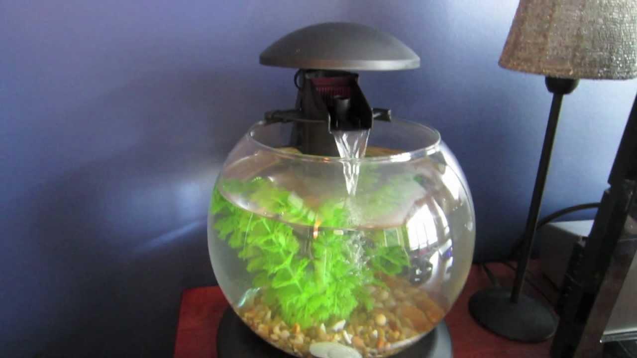 How To Set Up A Small Aquarium Globe Youtube
