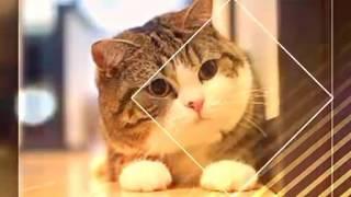 Коты под песню Давай навсегда .