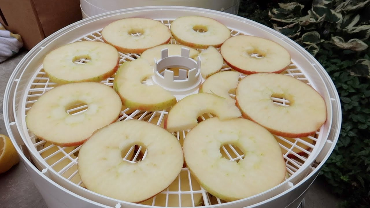 Drying Apples & Trying Out A New Dehydrator! 🍎🍏🍎// Garden Answer