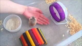 How To Tame A Robo Hamster: Tips