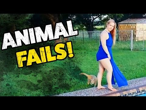 WHAT COULD GO WRONG #1 (ANIMAL EDITION!) | Funny Weekly Videos | TBF 2018