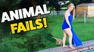 best animal fails funny fail compilation