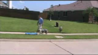 Dallas Dog Training, All Dogs Unleashed