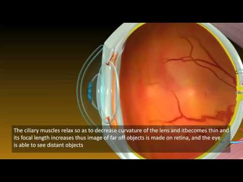 Power of Accommodation of Human Eyes | Class 10th Science Video