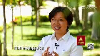 《走遍中国》 20191009 山高水长| CCTV中文国际