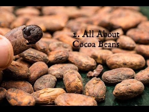 2  All About Cocoa Beans