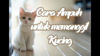 Suara Kucing Ini Sangat Ampuh Untuk Mendatangkan kucing Kalian . . . Jangan lupa klick tombol Subcribe dan jika kalian suka klik tombol like nya agar tidak ...