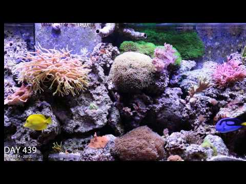 Reef Aguarium 2 year time lapse video in HD