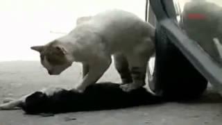 Самое трогательное видео кот пытается спасти кошку