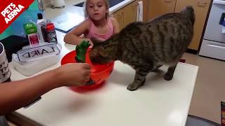 Scared Cat Home 2020 Compilation Funny  Videos EPIC LAUGH