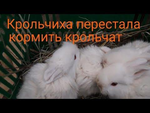 Вопрос: Почему кролиха отказалась кормить крольчат?