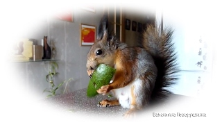 Один день из жизни белки Нобеля. Tame squirrel Noble.